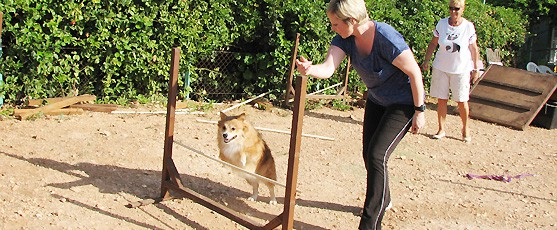 Dog Training and Agility Courses